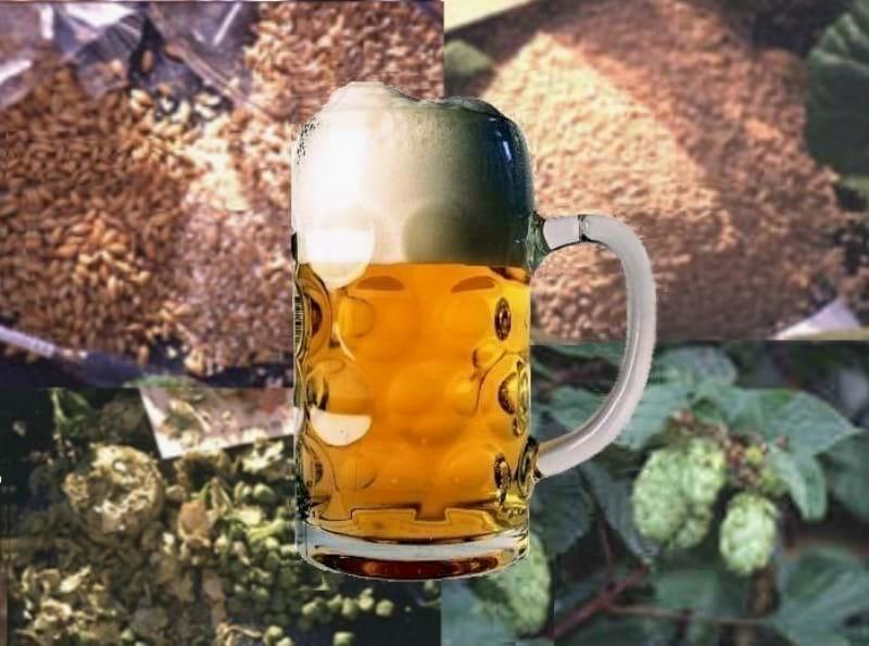 Cervejaria Piloto Educacional